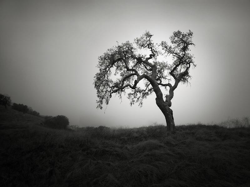 Tree along Ohlone Trail