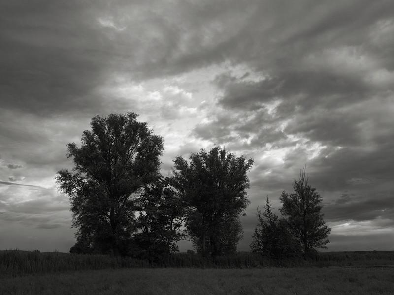 Bäume am Gländgraben