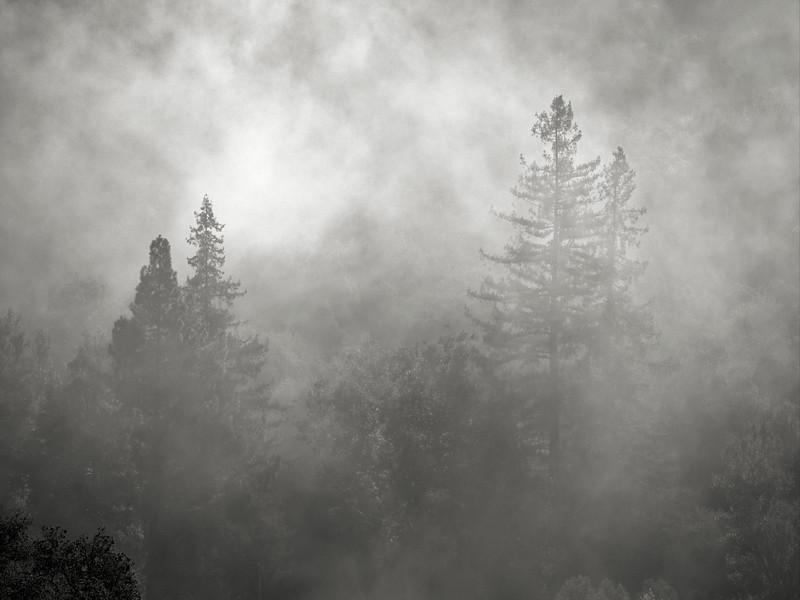 Trees in Fog at Almaden Quicksilver