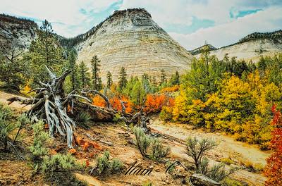 Zion's Autumn colours and textures