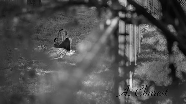 La liseuse sous les arbres