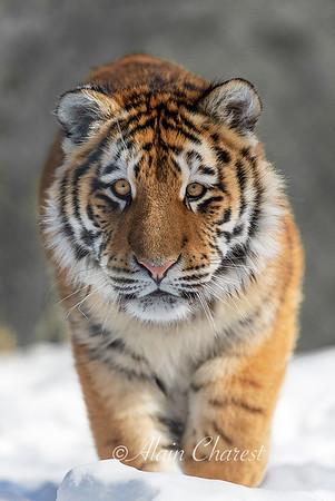 Zoo en hiver