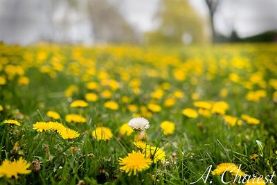 Fleurir en solitaire
