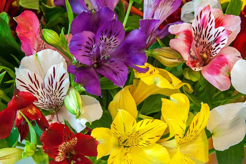 Alstromeria - aka: Peruvian Lilies