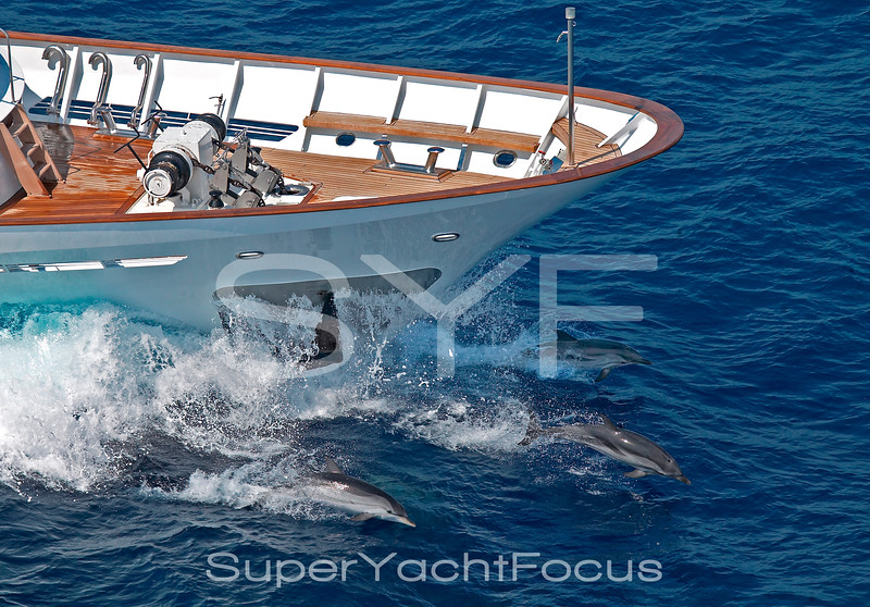 Three dolphins under the bow