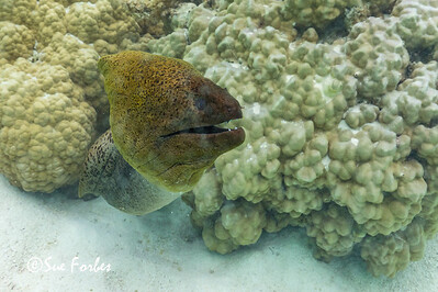 191014_Moorea_French Polynesia_290