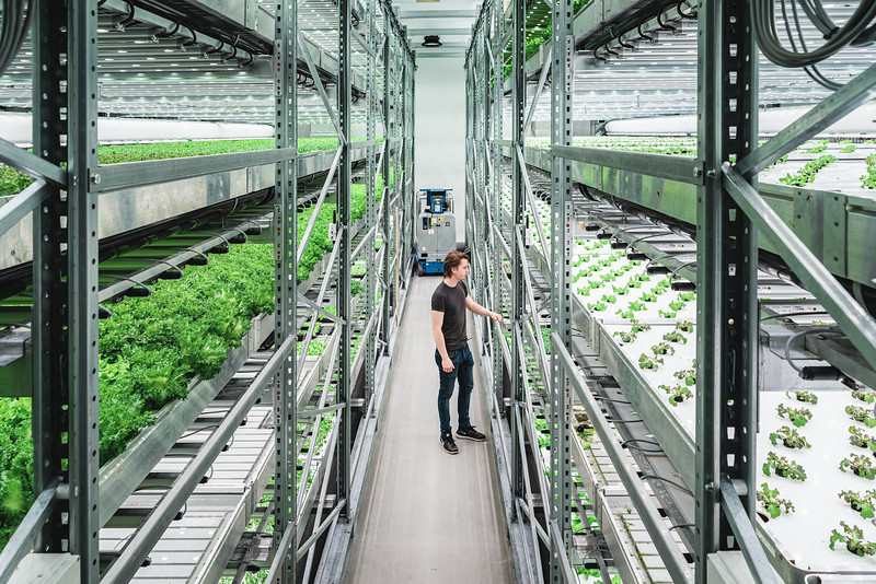 Jasper Van Beek, during a daily check at Vaxa's facilities, the only vertical farm in Iceland. The company was founded 2 years ago by a team of young entrepreneurs to grow fresh sustainable vegetables close to Reykjavik center. This cuts down distance traveled in the supply chain and reduces farming's impact on the environment.