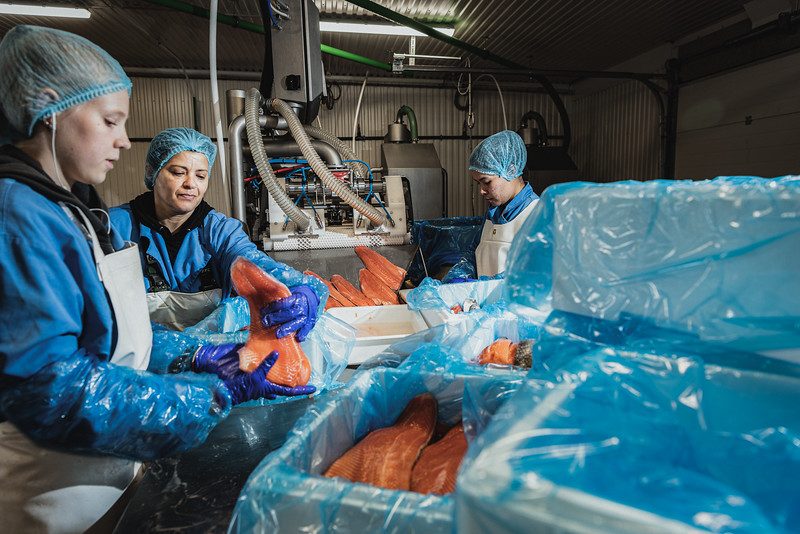 Matorka processing facilities in Grindavik. Once the fishes reach optimal size, they are harvested and transported to the processing facility, located a few kilometers away from the fish farm. Here, the fishes are processed, filleted, quickly chilled and shipped to the market.