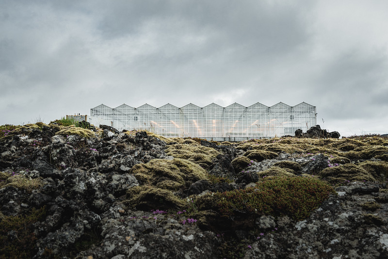 Bioeffect greenhouse located in the lava fields of Reykjanes Peninsula. This high-tech carbon-negative greenhouse uses energy and heat from the neighbouring Svartsengi Blue Lagoon Power Station.