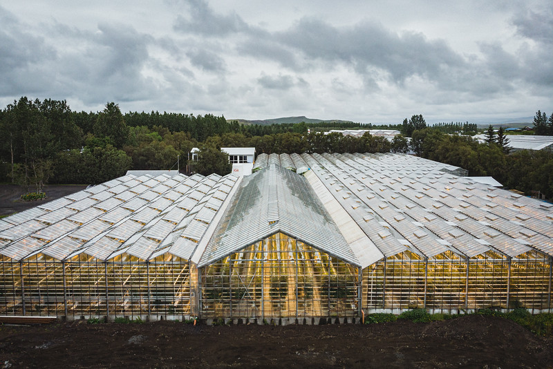 The tomato greenhouse of Friðheimar, in Reykholt. The tomatoes are grown all year, using green energy and biological pest controls. Photosynthesis is enhanced by using carbon dioxide produced from natural geothermal steam. Each greenhouse is equipped with a state-of-the-art climate-control computer system for temperature, humidity, carbon dioxide and lighting. The controlled environment avoids use of any agrochemicals or pesticides.