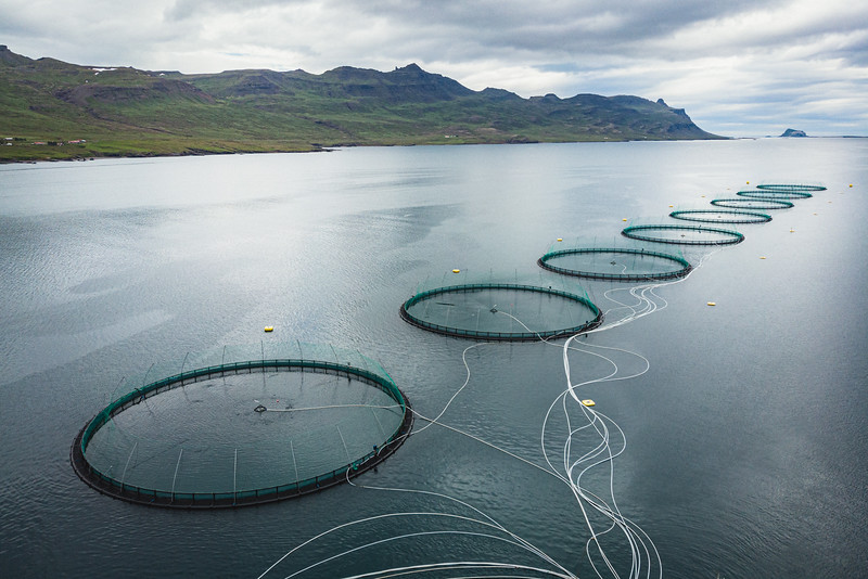 The fish farm of Ice Fish Farm in Faskrudsfjordur. There is a great attention to sustainable and responsible fish farming, achieved through eco-friendly operation that nurtures both the environment and workers. Fish farming in the Atlantic fiords has zero bycatch, as no other species are unintentionally caught or harmed by fishing lines or nets. There is  no need to use antibiotics, chemicals or delousing and no anti foiling on nets. Fish are fed with non-GMO feed ensuring an GMO free operation.