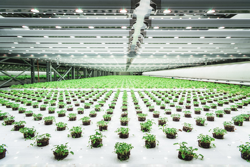 Lettuce seedlings at Vaxa vertical farm, in Reykjavik. By cultivating on many floors, the need for land is reduced. The control system optimises energy and water utilization. Cultivation is completely independent of external factors, such as seasons, weather, insect or plant diseases. Vaxa's produce can be reliably grown 24/7 without any pesticide.