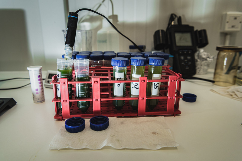 Microalgae samples at a quality control checkpoint performed at Algalif laboratory, in Keflavik. Water, air and the algae cultures are carefully screened to confirm the absence of contaminating microorganisms.