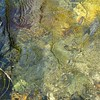 Grass in Water 3