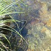 Grass and Water 2