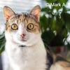 Scardie Cat