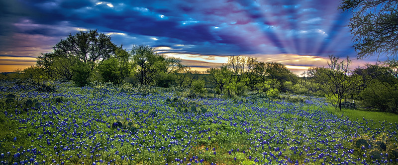 Waking Up In Texas