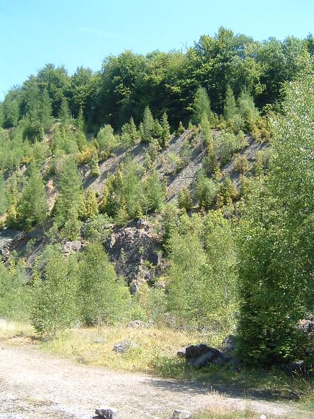 Shake Mantle Quarry - Lower Limestone Shale