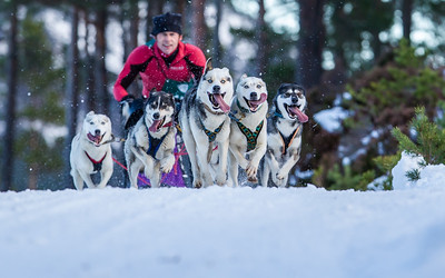 Happy dogs: Craig Robertson of Newcastle at Aviemore for the Siberean Husky Club of Great Britain race. Picture Paul Campbell