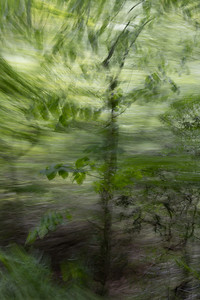 Panning from the Passenger Window No. 1 (Color)