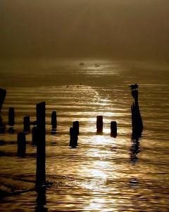 Morning Sea Fog