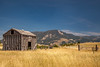 Barn and wheat field  in the Gallatin Valley, north of Menard.  The Bridger Mountains are in the distance.
