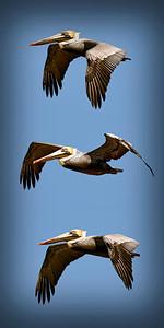 Pelican Stack