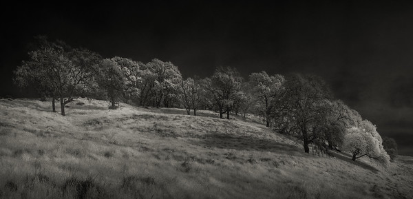 TREES OF PEÑA ADOBE