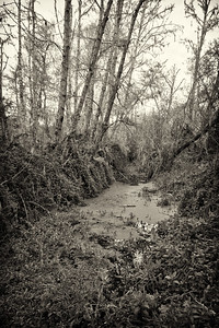 SWAMP FOREST NO. 1