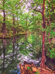 Cypress Creek