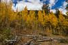 Colorado in the fall.