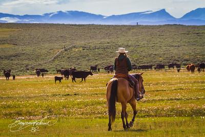 Cowgirl Sunup