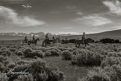 This shot just looks way better monochromatic.  Has that true western feel about it.  -BP-