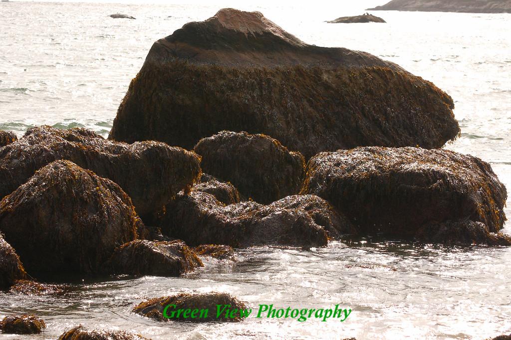 Sea weed on Rocks