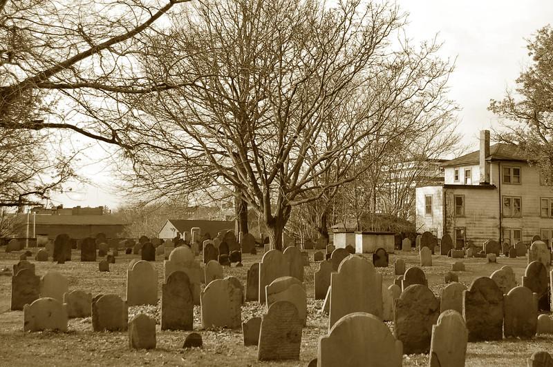 Tree amoung grave stones