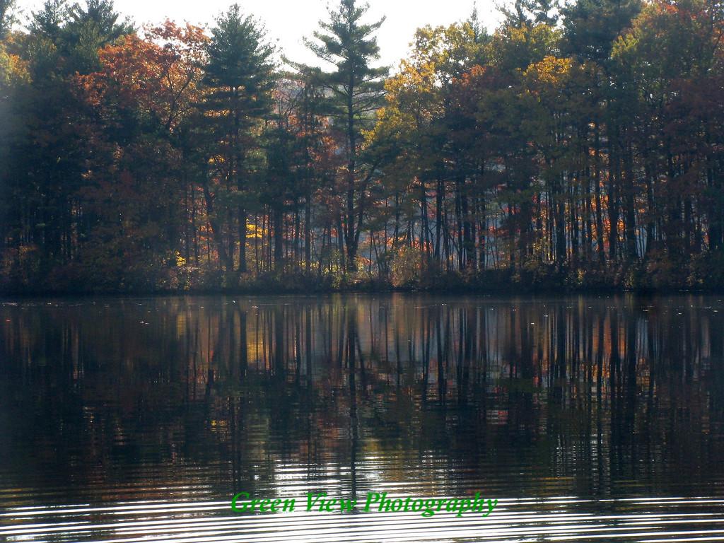 Through the Trees, Ashland State Park