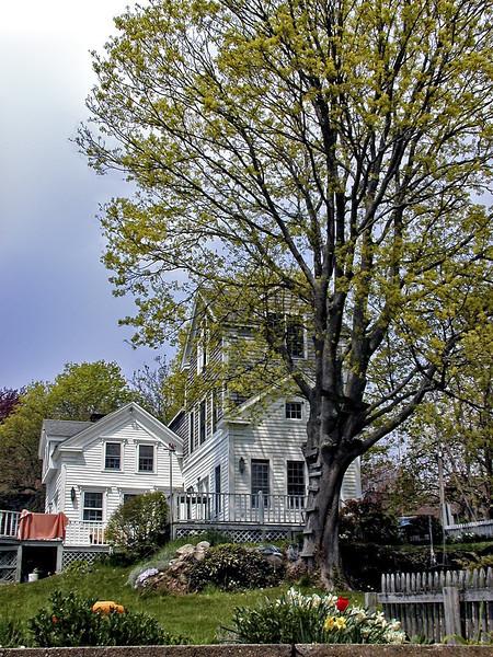 Connecticut Spring