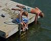 Annisquam Summer