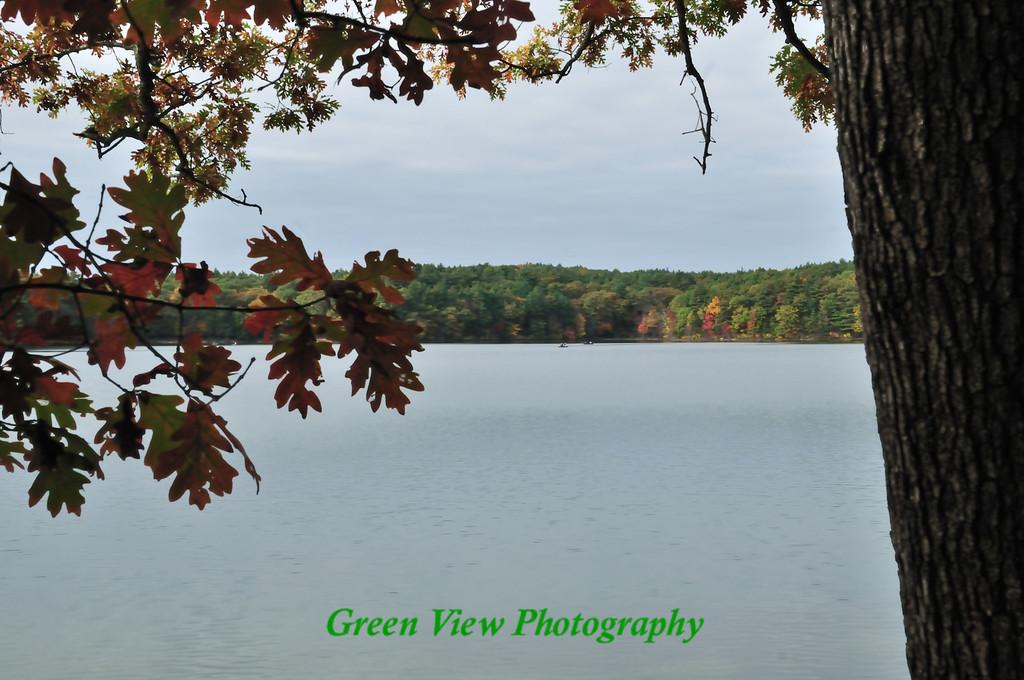 Changing Oak Leaves