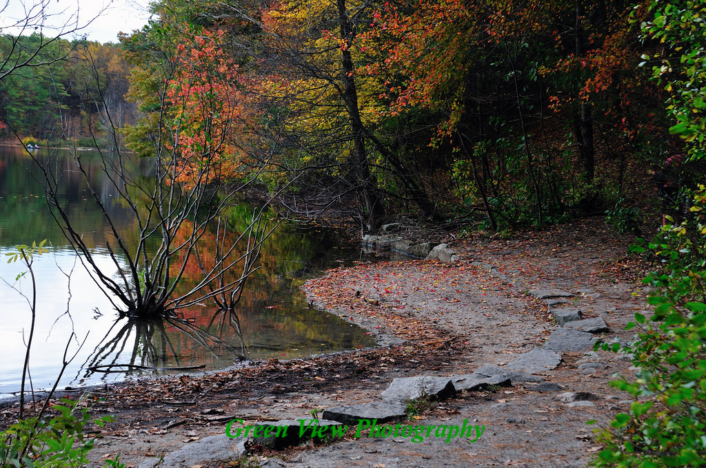 Shoreline around the Pond