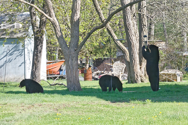 In a neighborhood near the mill complex was a family out having an early morning picnic!<br /> 5/9/2018