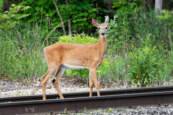 Curious railfan pausing in the gauge...<br /> 6/6/2018