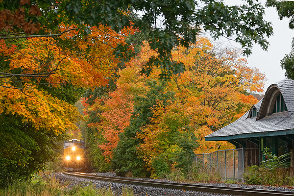 Yellow on yellow - Fall colors really pop on a cloudy, showery morning as Q008 approaches the historic station in the center of Warren MA.<br /> 10/2/2020