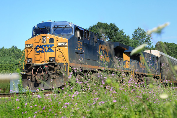 Midsummer in New England.  A string of auto racks backs West, past the Queen Anne's Lace and the Iron Weed at MP60, Spencer, MA on the CSX Boston Line. 7/22.2012 - 598C9421dK