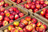 A closeup of crates of apples at McSherry's Fruit Orchard in Conway, New Hampshire, USA.