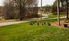 _KBD7872 2016-03-16 Donaldson Landscaping