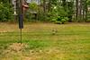 _KBD8289 2016-07-03 Ducks at bird feeder