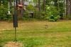 _KBD8290 2016-07-03 Ducks at bird feeder