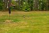 _KBD8288 2016-07-03 Ducks at bird feeder