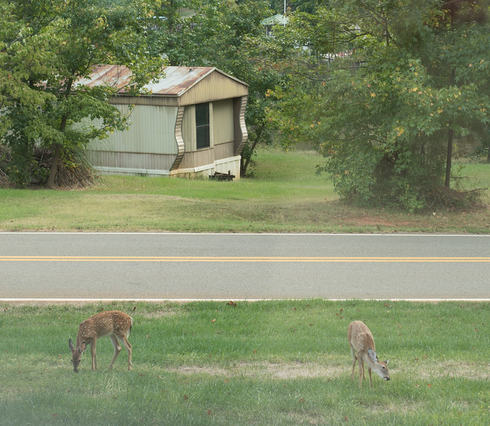 20160922 Deer in front yard KBD_1775